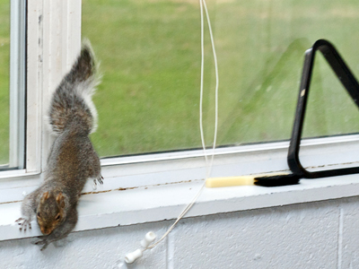 Photo of Squirrels make a home with fraternity brothers