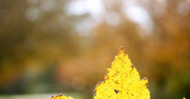 Photo of Photo Gallery: Autumn 2011