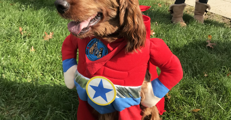 Photo of Dressed to the canines: Halloween has gone to the dogs