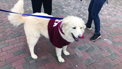Photo of Rider's best friend: Students pause for paws