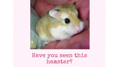 Photo of A fourth grade class and a missing hamster makes for a not-so sweet situation