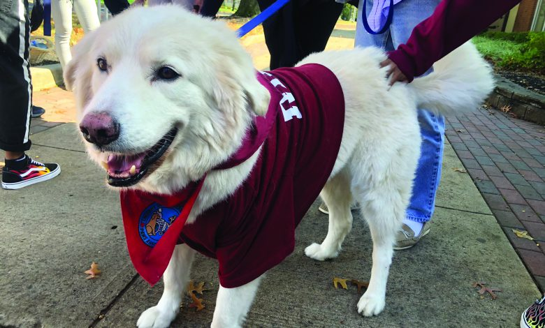 Photo of No laws when you've got paws: Pet therapy on campus